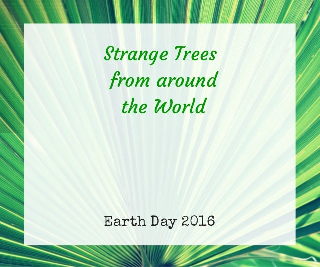 Earth Day 2016 Strange Trees from around the World