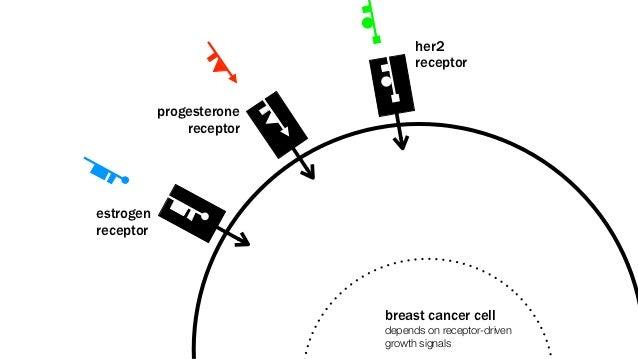 her2                                receptor           progesterone               receptorestrogenreceptor                ...