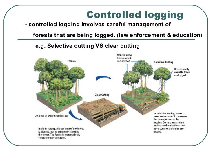 strategies to manage deforestation. Black Bedroom Furniture Sets. Home Design Ideas