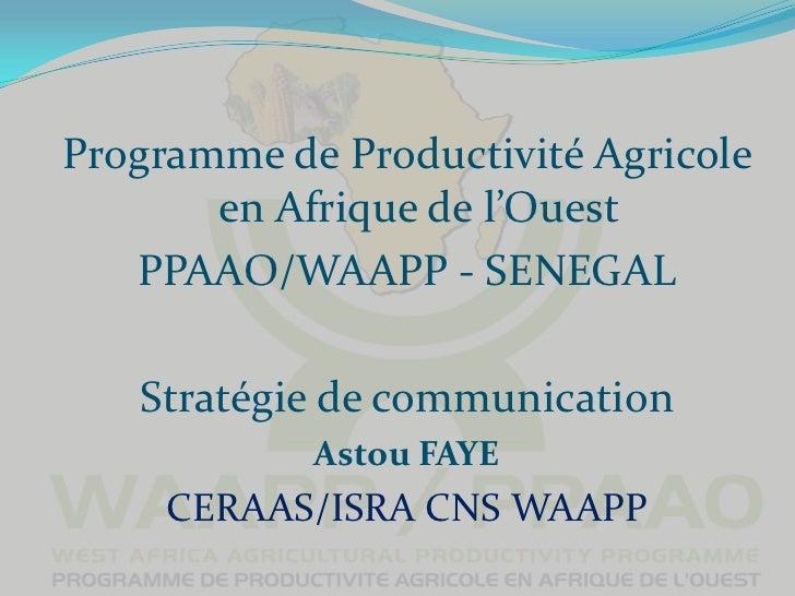 Programme de Productivité Agricole       en Afrique de l'Ouest   PPAAO/WAAPP - SENEGAL   Stratégie de communication       ...