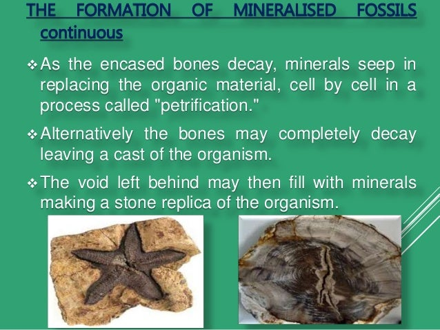 Index fossil dating method 5