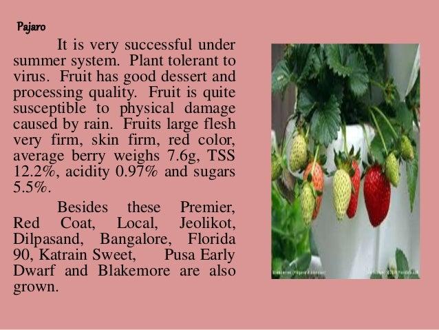 evolution strawberry slide