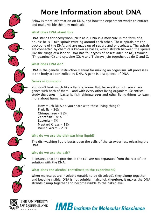 Strawberry dna lab extraction lab report   How to start an ...