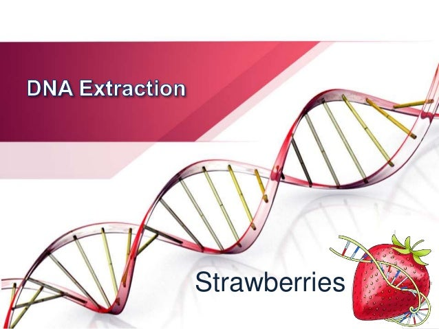 dna extraction strawberry