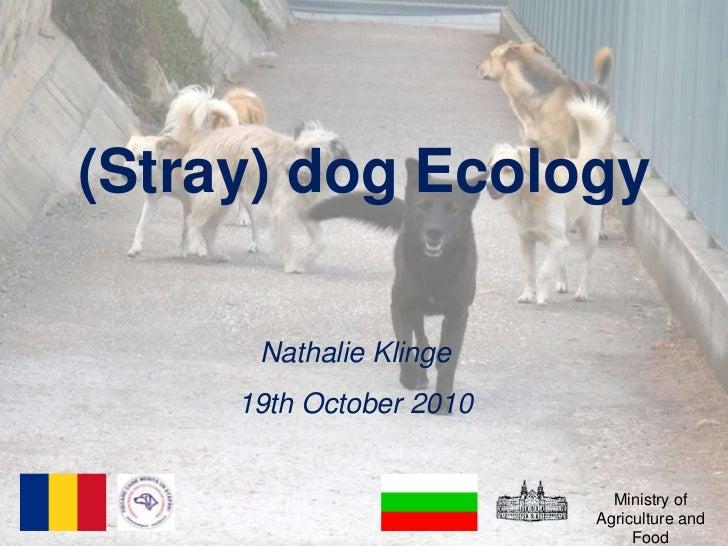 (Stray) dog Ecology<br />Nathalie Klinge<br />19th October 2010<br />Ministry of Agriculture and Food<br />
