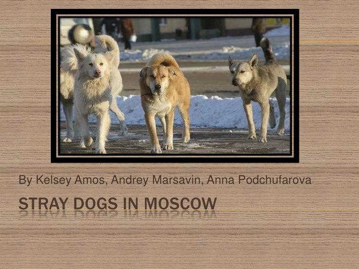 Stray dogs in MOscow<br />By Kelsey Amos, Andrey Marsavin, Anna Podchufarova<br />