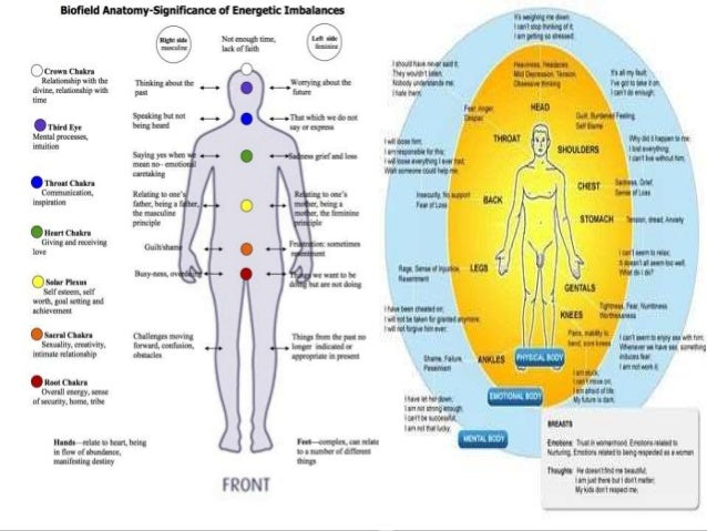 Journey Into The Anatomy And Physiology Of The Human