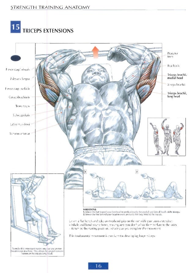 Strenght training anatomy