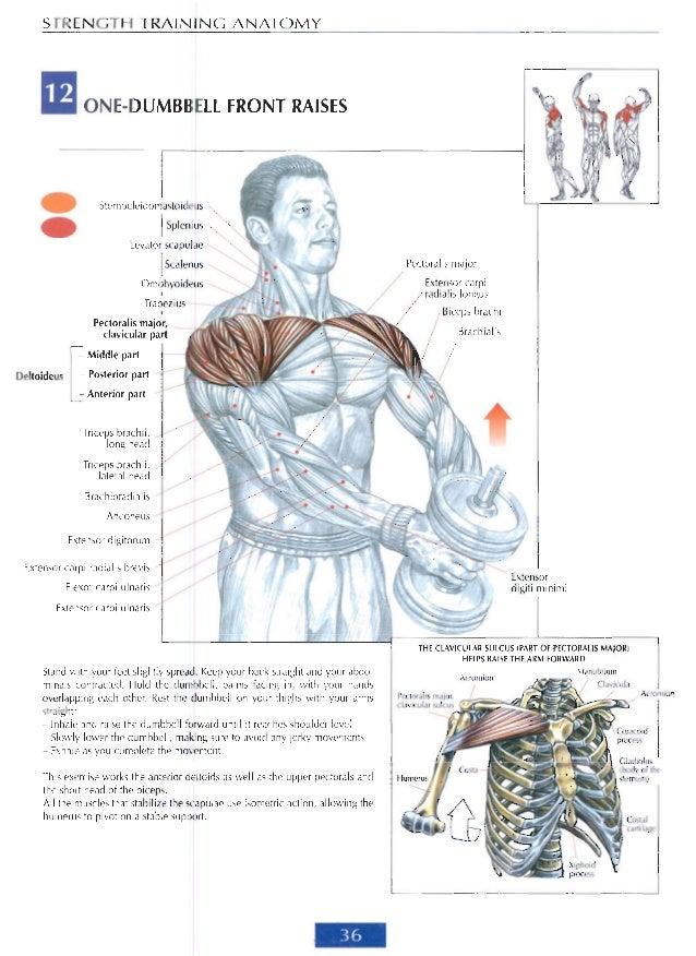 The anatomy of strength training