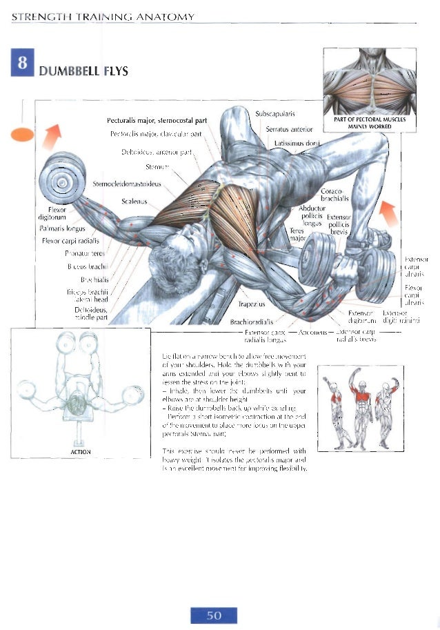 Anatomy For Strength And Fitness Training Image collections - human ...