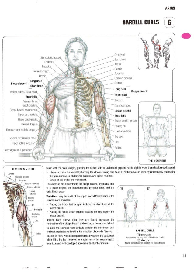 Old Fashioned Muscle Training Anatomy Collection - Anatomy And ...