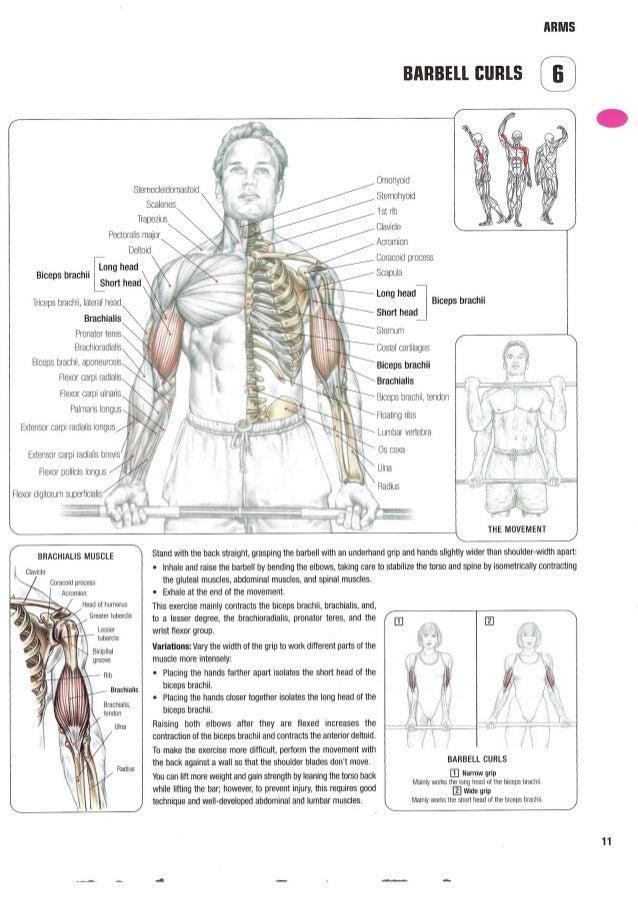 Strenght Training Anatomy Gallery - human body anatomy