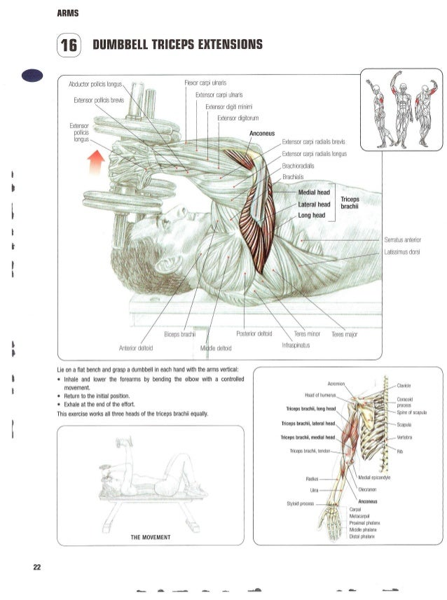Contemporary The Strength Training Anatomy Workout Ii Elaboration ...
