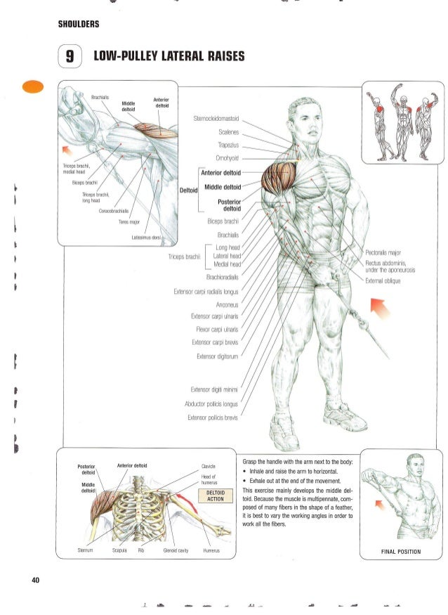 Nice Strength Training Anatomy Frederic Delavier Elaboration ...