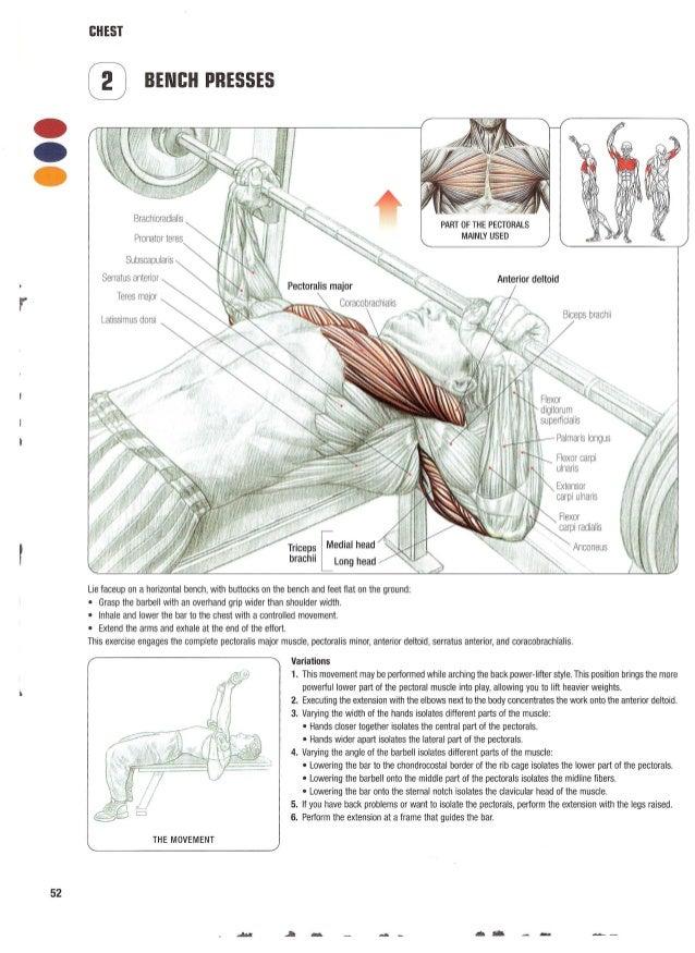 Old Fashioned Anatomy Of Strength Training Elaboration - Anatomy And ...