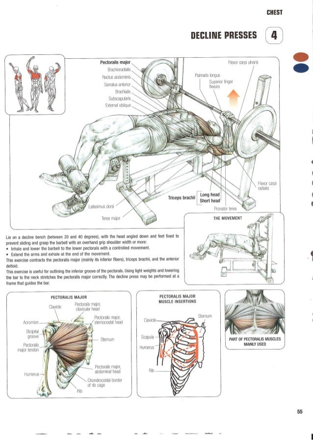 Strength training anatomy 2nd edition