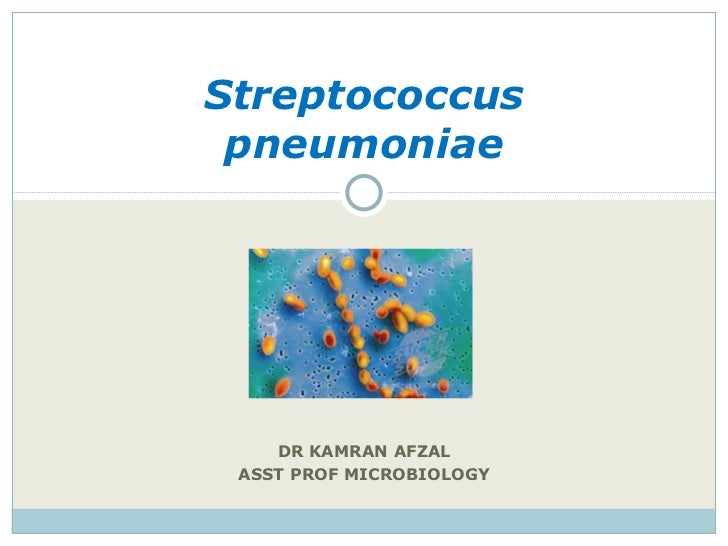DR KAMRAN AFZAL ASST PROF MICROBIOLOGY Streptococcus pneumoniae