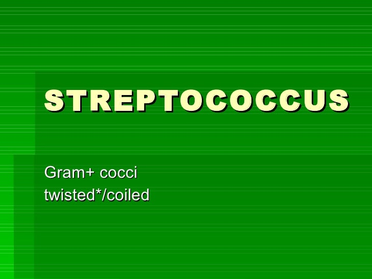 STREPTOCOCCUS Gram+ cocci twisted*/coiled