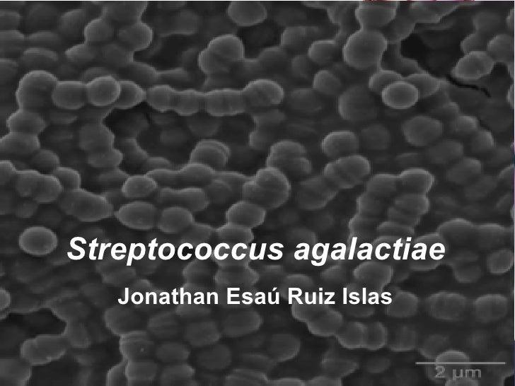 Streptococcus agalactiae Jonathan Esaú Ruiz Islas