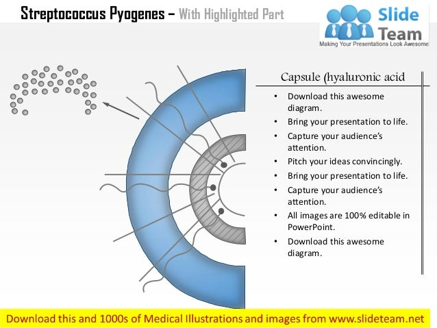 Streptococci. Ppt video online download.