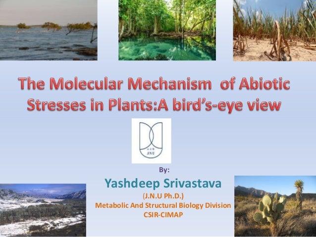 By: Yashdeep Srivastava (J.N.U Ph.D.) Metabolic And Structural Biology Division CSIR-CIMAP