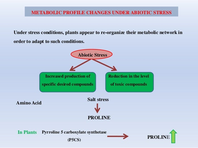 METABOLIC PROFILE CHANGES UNDER ABIOTIC STRESS Under stress conditions, plants appear to re-organize their metabolic netwo...