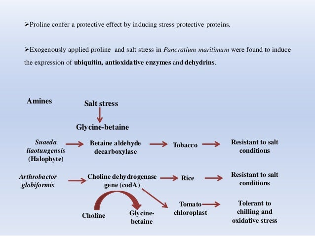 Proline confer a protective effect by inducing stress protective proteins. Exogenously applied proline and salt stress i...