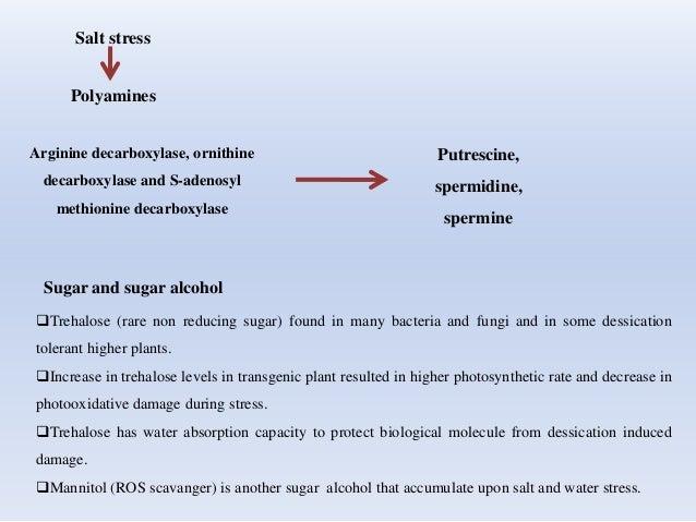 Salt stress Polyamines Arginine decarboxylase, ornithine decarboxylase and S-adenosyl methionine decarboxylase Putrescine,...