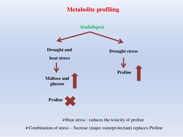 Metabolite profiling Arabidopsis Drought and heat stress Maltose and glucose Proline Drought stress Proline Heat stress :...