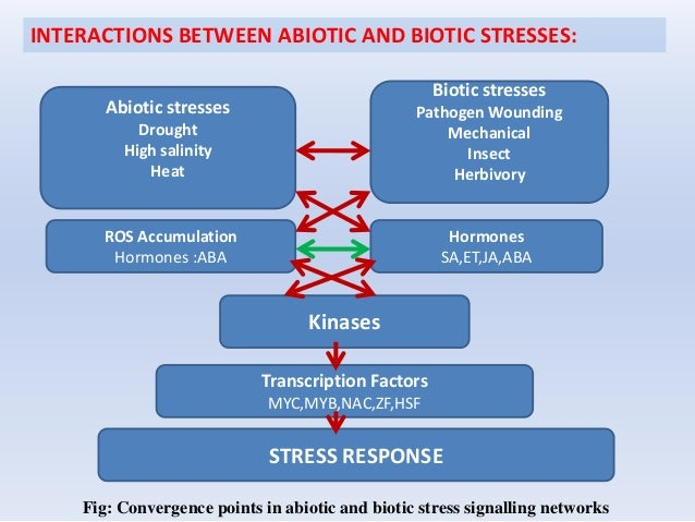 INTERACTIONS BETWEEN ABIOTIC AND BIOTIC STRESSES: Abiotic stresses Drought High salinity Heat Biotic stresses Pathogen Wou...