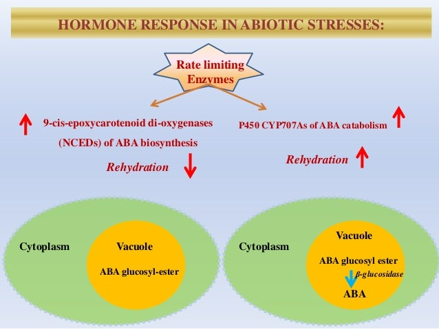 HORMONE RESPONSE IN ABIOTIC STRESSES: Rate limiting Enzymes 9-cis-epoxycarotenoid di-oxygenases (NCEDs) of ABA biosynthesi...