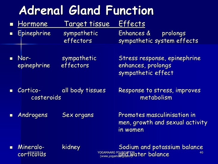 Stress Adrenal Cortex