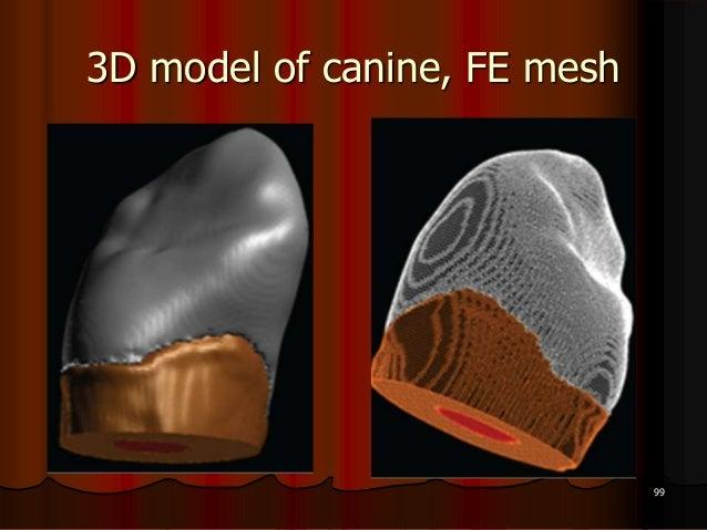 3D model of canine, FE mesh99