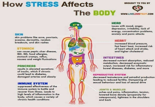 the meaning of stress and the three damaging effects of stress