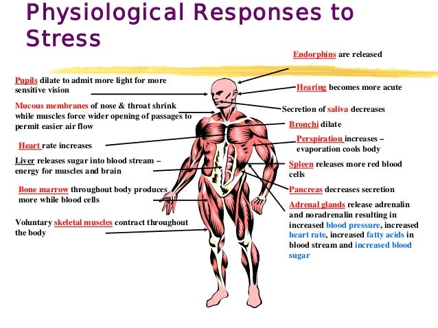 physiological stress The body's response to stress is its natural, automatic response to a perceived danger or to an upsetting situation it activates a chain reaction of events in the body known as the body's physiological responses to stress as it rises to the occasion to meet the stressful situation the fight or.