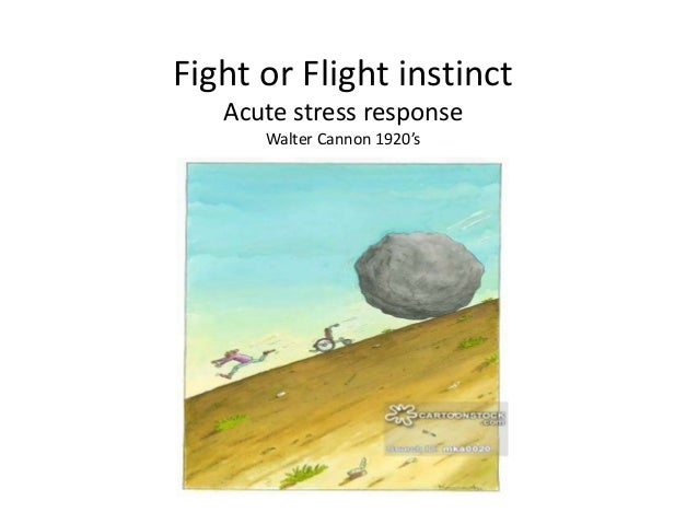 acute stress response Acute stress response (asr) the asr crisis stress physical response begins in the human brain when someone perceives and recognizes a danger, threat, crisis or emergency, this sensory threat-fear information is first transmitted to the amygdala, an area of the brain that contributes to emotional processing.