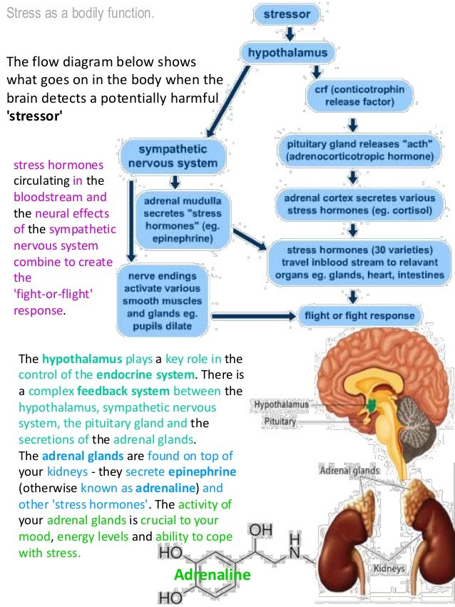 psychology as level aqa stress Revision:stress psychology aqa revision notes  stressor persists, the body  adapts by returning to a normal level of functioning while coping with the stressor.