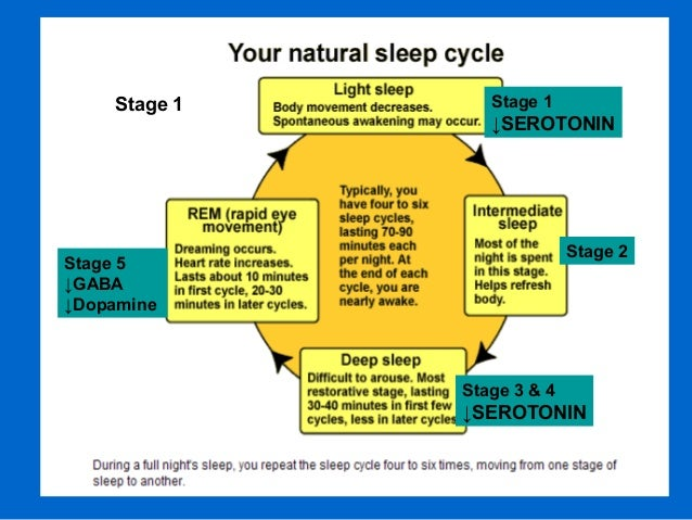 Stage 1 Stage 1 ↓SEROTONIN Stage 2 Stage 3 & 4 ↓SEROTONIN Stage 5 ↓GABA ↓Dopamine
