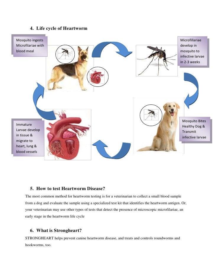 STRONGHEARTHEARTGARDEffectiveIngredients(Ivermectine/Pyrantel)Kill roundworm & HookwormChewable TabletsMonthly Administrat...