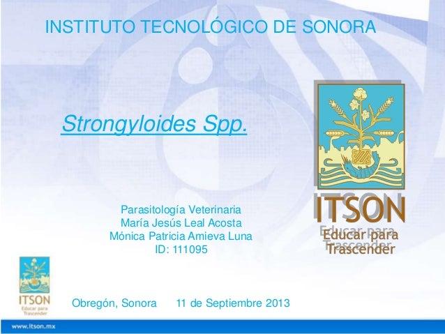 INSTITUTO TECNOLÓGICO DE SONORA  Strongyloides Spp.  Parasitología Veterinaria María Jesús Leal Acosta Mónica Patricia Ami...