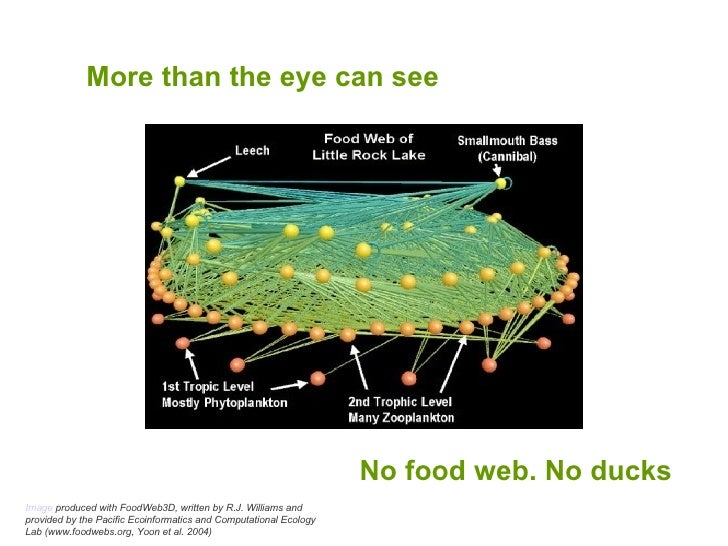 More than the eye can see No food web. No ducks Image  produced with FoodWeb3D, written by R.J. Williams and provided by t...