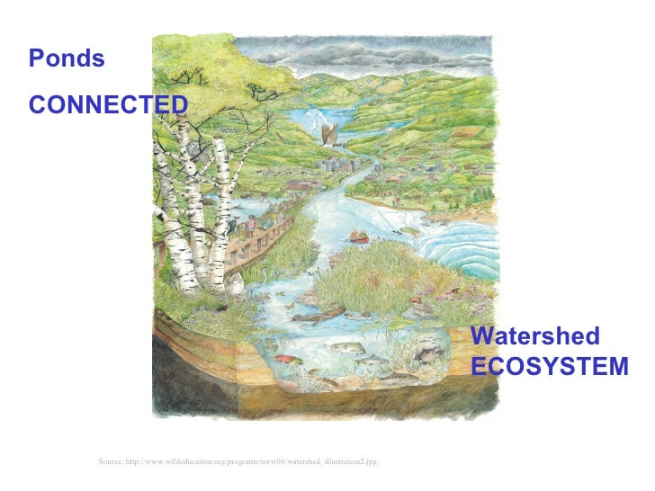 Source: http://www.wildeducation.org/programs/nww06/watershed_illustration2.jpg Watershed ECOSYSTEM   Ponds CONNECTED