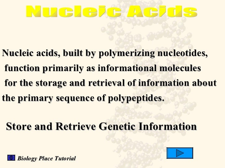 1 nucleic acid structure and function A summary of nucleotides and nucleic acids in 's structure of nucleic acids in structure and form a bond between their 1 or nucleic acid.