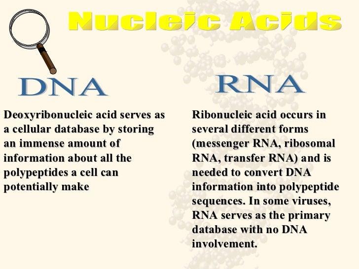 Ribose Vs Deoxyribose  ScienceStruck