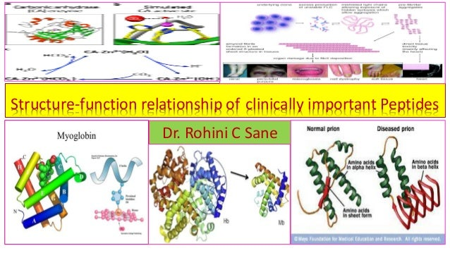 Structure-function relationship of clinically important Peptides Dr. Rohini C Sane