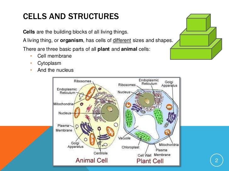an introduction to the analysis of cells the basic building blocks of all living things Genes and cancer advances in science have improved our knowledge of the inner workings of cells, the basic building blocks of the body all living things are made of cells.