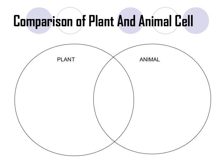 Venn Diagram Animal Cell Vs Plant Cell Webquest Product Wiring