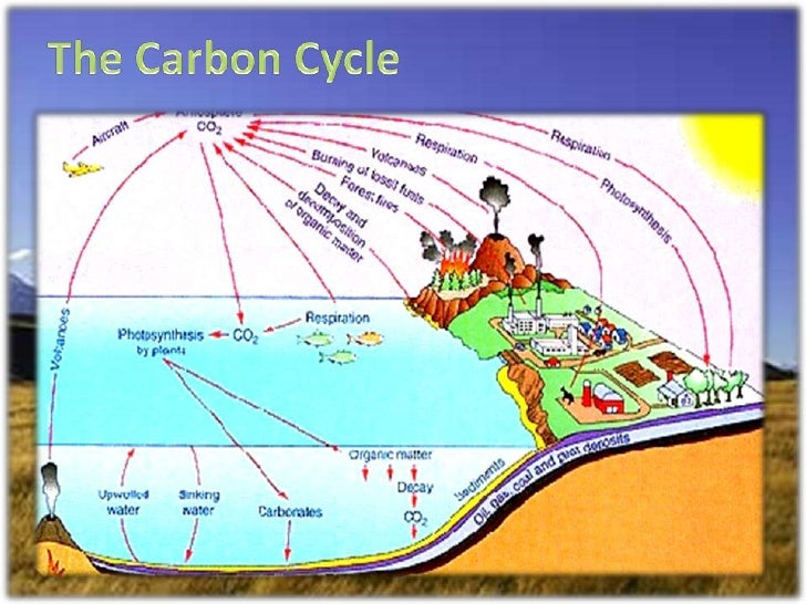 ecosystem structure funstion and change Carbohydrates are the sugars,  the difference between the two forms is the chemical structure and how quickly the sugar is absorbed and digested.