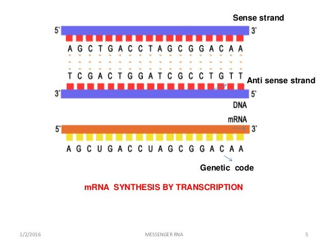 an analysis of messenger rna Mrna and protein expression analysis techniques have been increasingly  applied to the characterization of toxic signs since their introduction over a  decade.