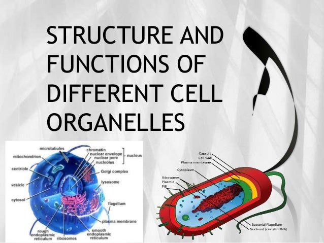 STRUCTURE ANDFUNCTIONS OFDIFFERENT CELLORGANELLES